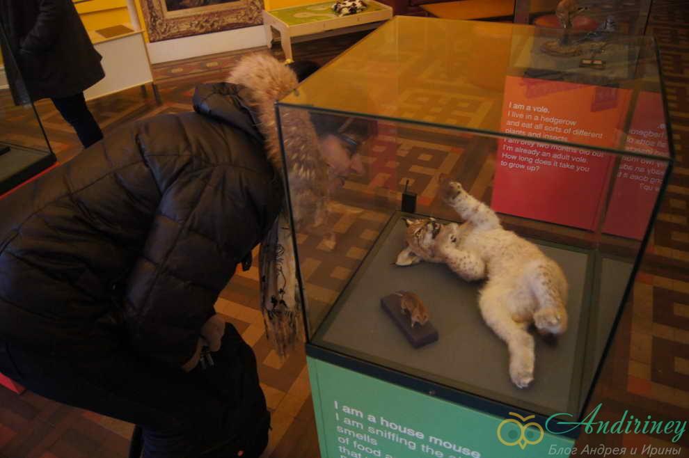 Бирмингемский музей