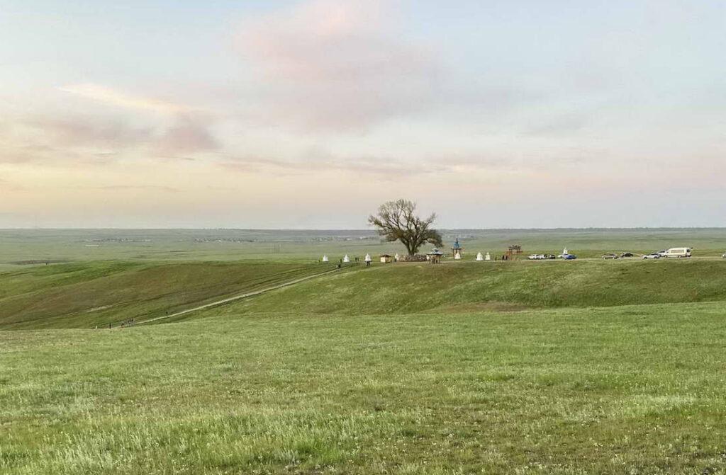 Одинокий тополь в Калмыкии, Элиста